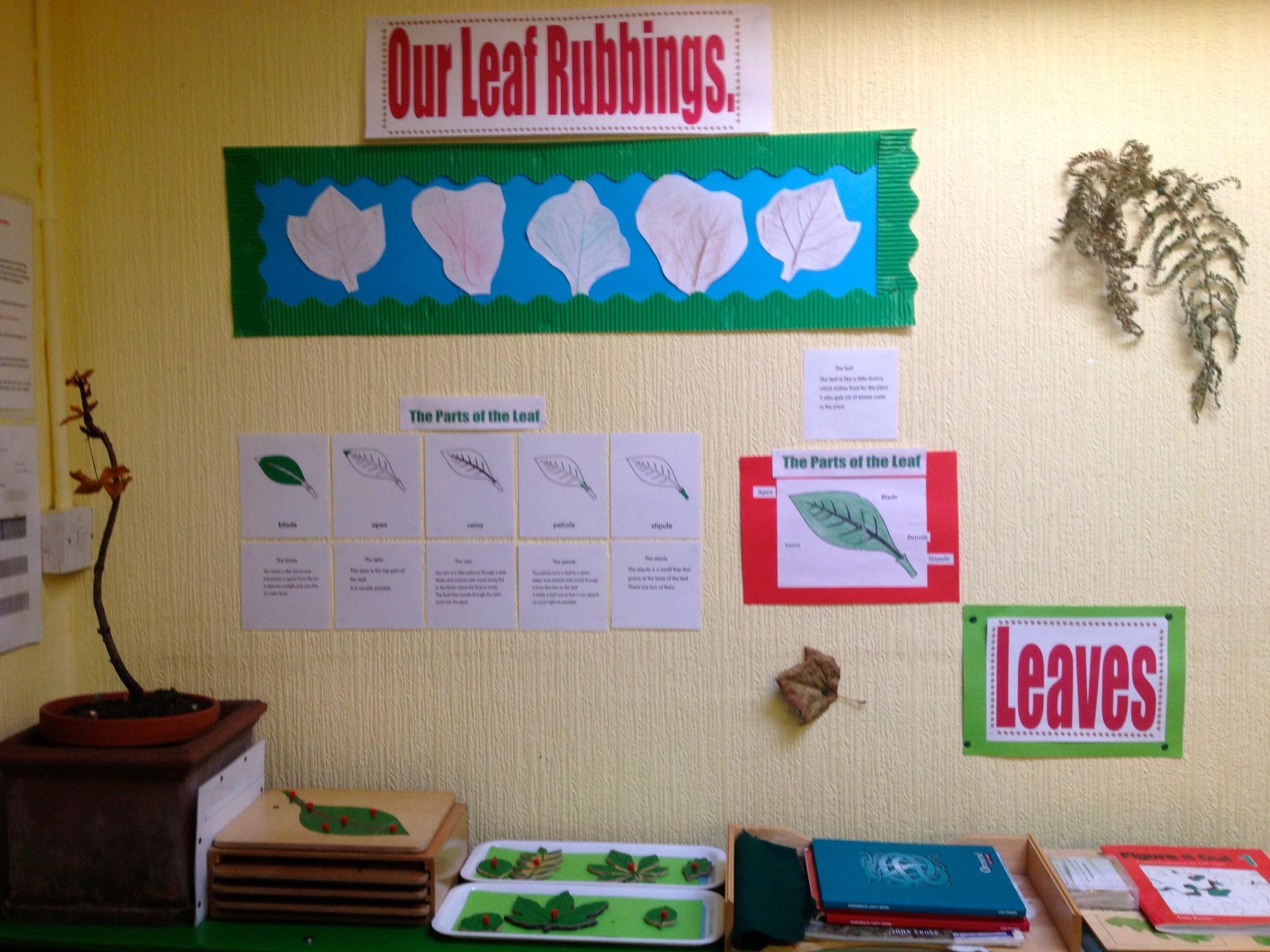 Leaf Structure Studies